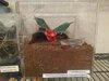 tarantula enclosure.jpg