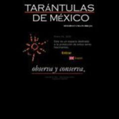 Tarantulas de Mexico