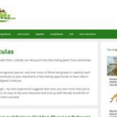 Keeping Exotic Pets - Tarantula Section
