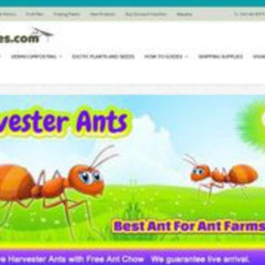 Insect Sales.com