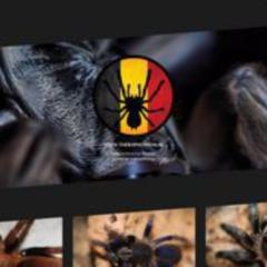 Theraphosidae.be