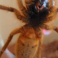 OBT, male or female?
