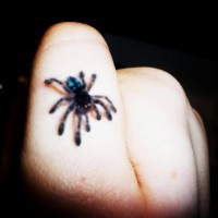 Versicolour Spiderling