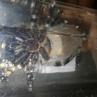 Regalis Better Pic I Hope M/f Help Please