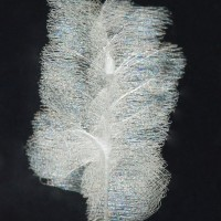 Phoneutria silk attached to the glass