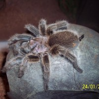 Spider Pic 009