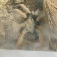 Told Aphonopelma Sp. What Do You Think?