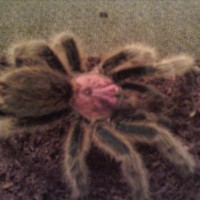 About Two Weeks After Molt ... She Looks Pretty Pink