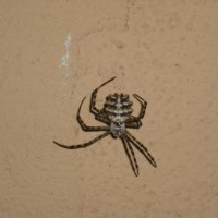 Name This Spider