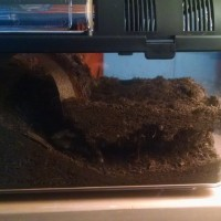 Hard At Work