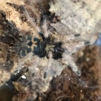 Maybe the beginning of a web hammock?