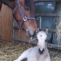 First foal of the year
