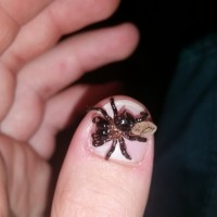 Thumb sized spider with a mountain sized bite