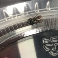Jumping Spider ID Request #1