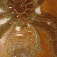 Theraphosa blondi [2/2]