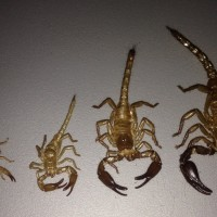 Scorpion Molts line-up Growth