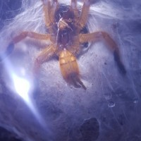 OBT 2.5inches++ M or F?