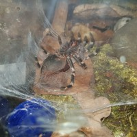 molting pic #1