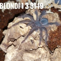 Captive Born Blondi!!!