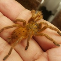 The only time I dare to hold my OBT