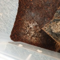 Poo or mold?