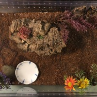 Enclosure for MF Grammostola pulchripes