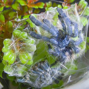 Safely molted