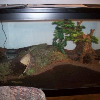 Molly's enclosure