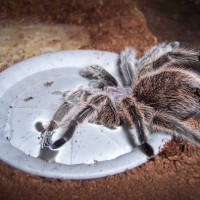 Close as to my tarantula