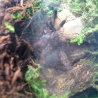 Male or female? i know its blurry