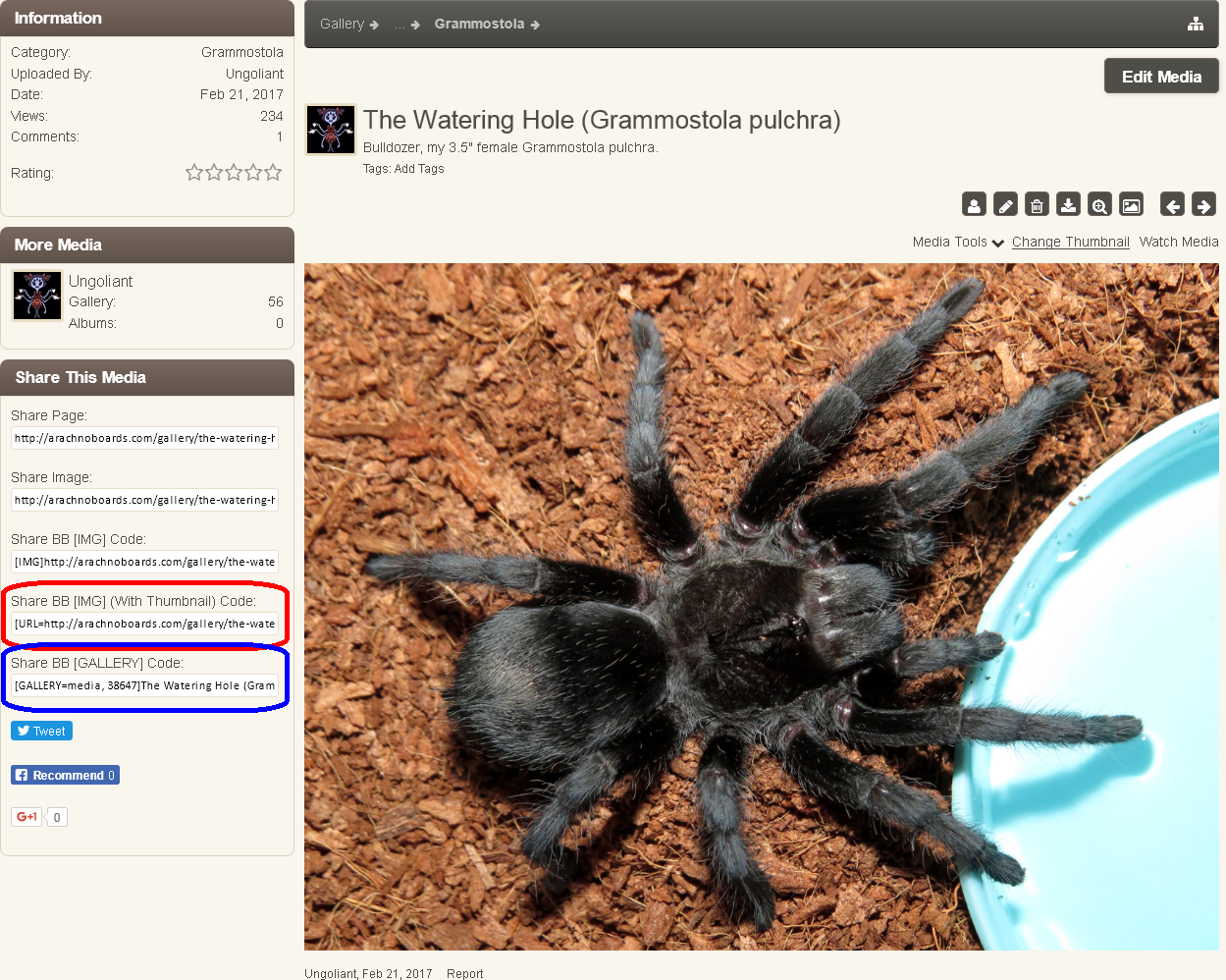 Embedding Arachnoboards Gallery Images