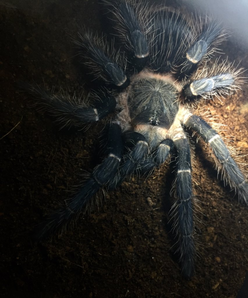 Freshly molted