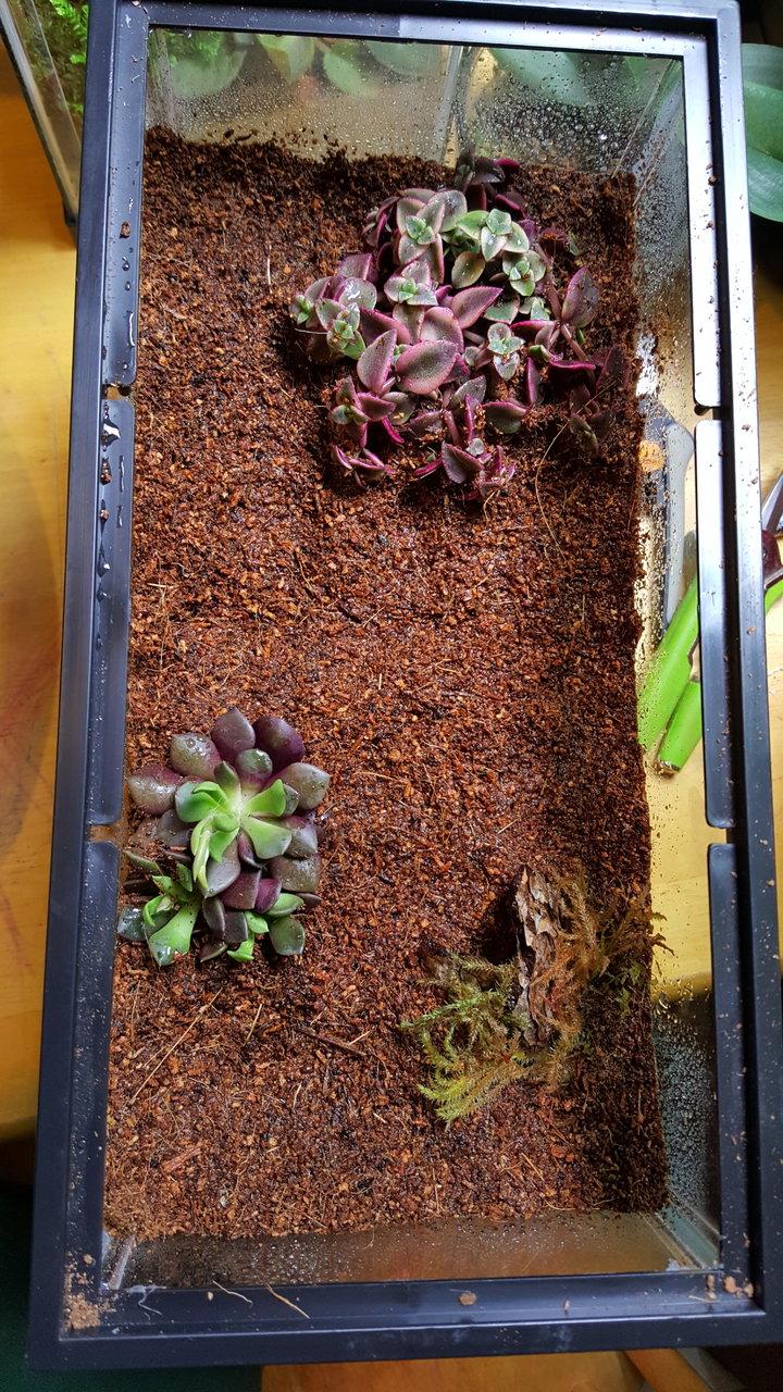 Desert Terrarium Plants Arachnoboards
