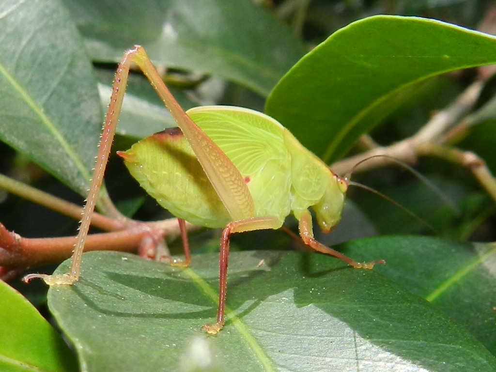 Katydid or Katy didn't.