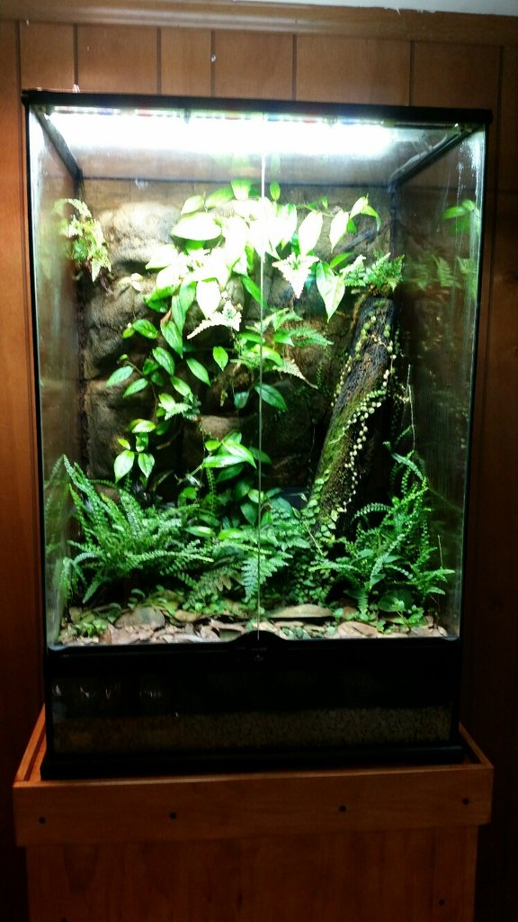 Enclosure Terrarium Pictures Page 77 Arachnoboards