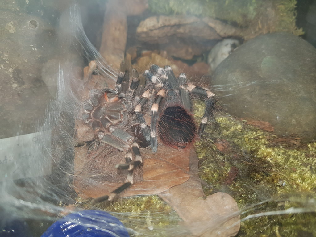 molting pic #3