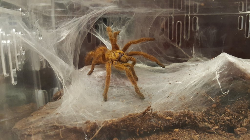 OBT new home, fully web