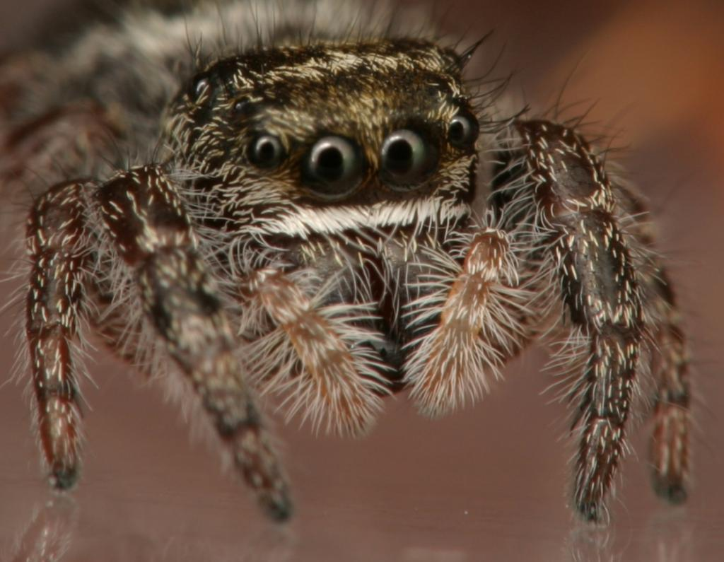 8 Smiling Spiders That Make You Feel Warm and Fuzzy - WebEcoist