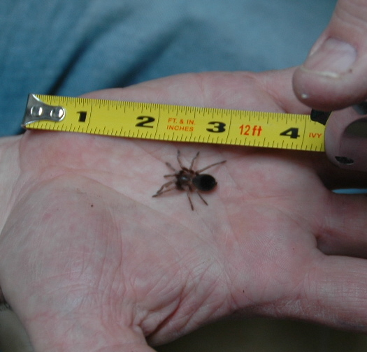 Smithi slings reach one inch