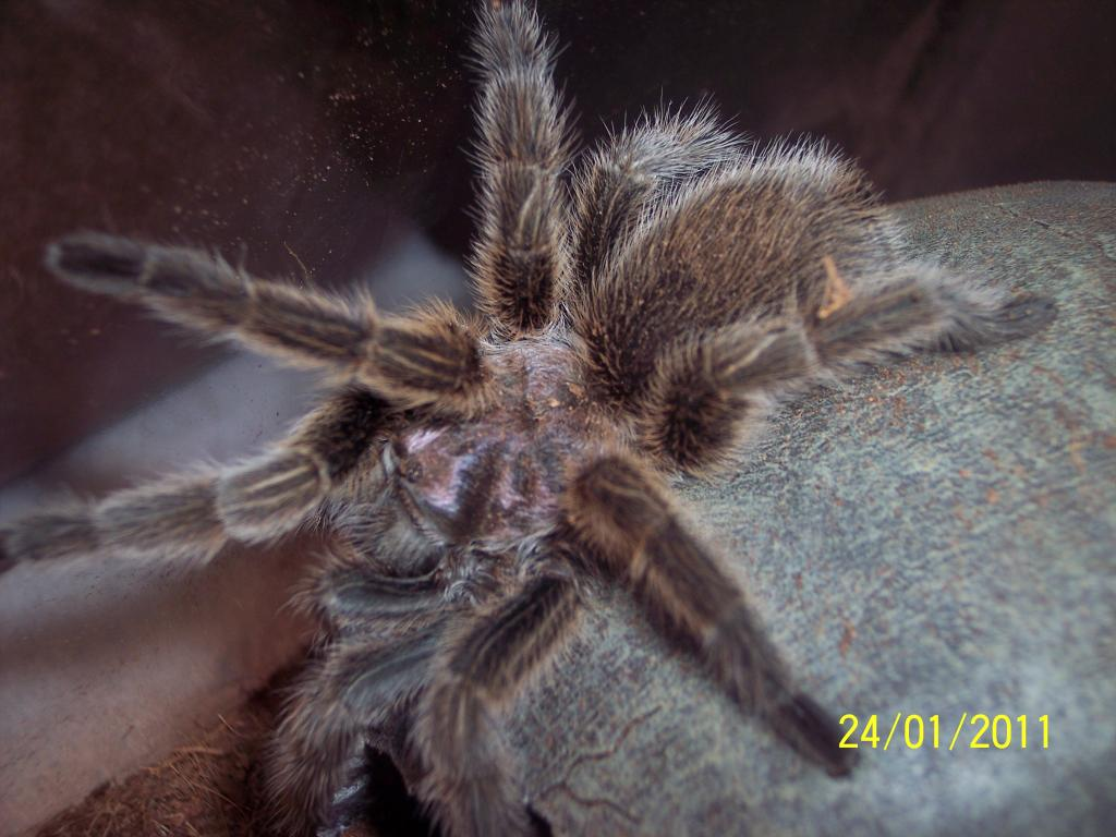 Spider Pic 004