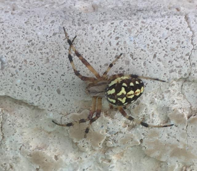 Unknown spider??